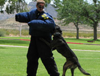 Attack by police dog